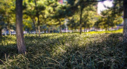 grassland green belt trees