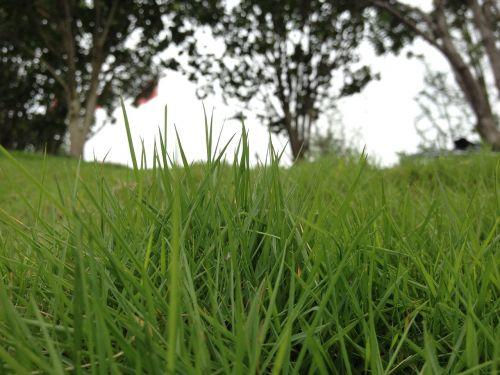 grassland riverside green