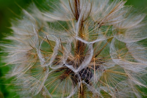 grassland plants  seeds  close up