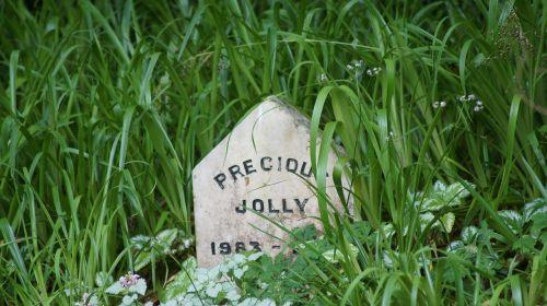 gravestone dog grave memories