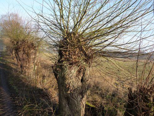 graze pasture tree