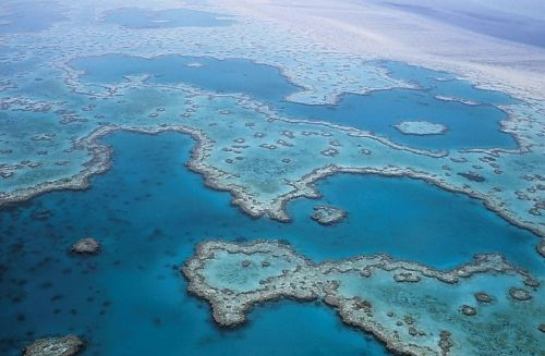 great barrier reef coral australia