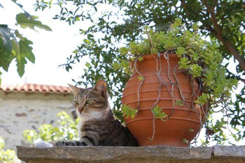 greece cat village