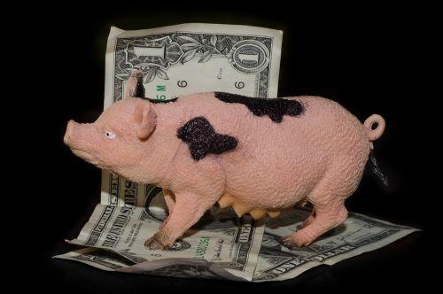 greedy pig money