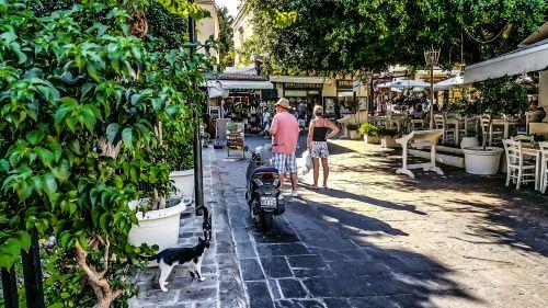 Greek Cats In Rhodes