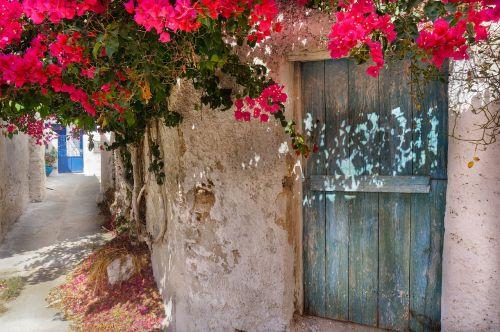 graikų sala,raudona,gėlės,Bugenvilis,senas kaimas,gatvė,senas namas,senos durys