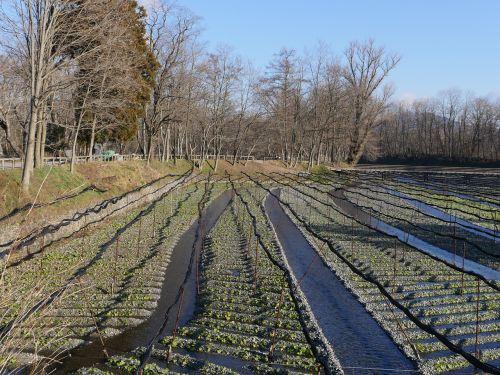 green farm agriculture