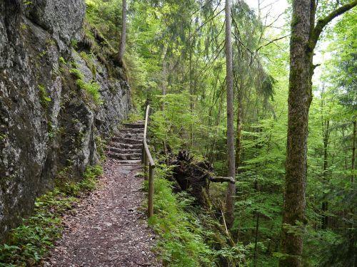 green path hike