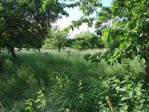 green,nature,chaos,grass,wild growth