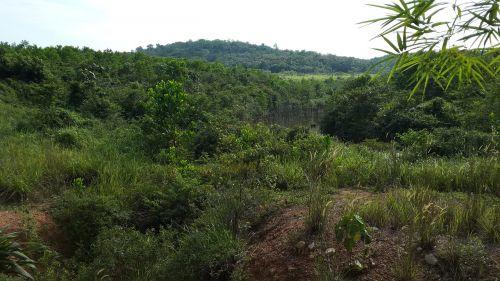green jungle malaysia