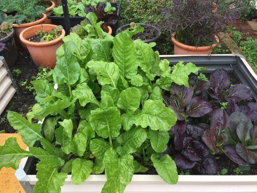 green growth healthy