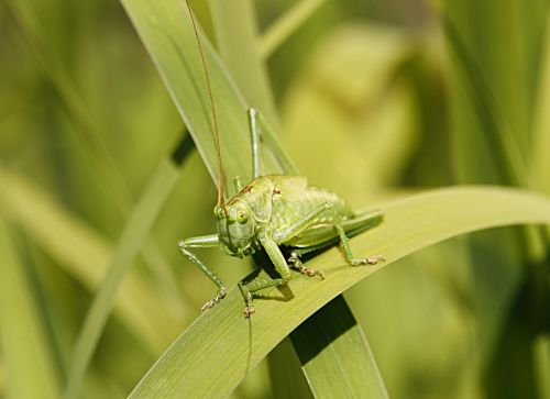 green grasshopper flip