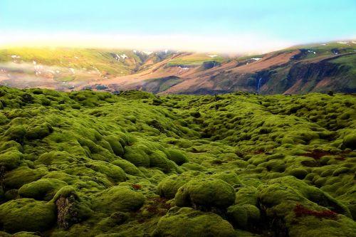 green moss scenery