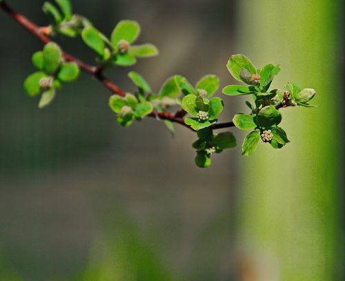 green bush nature
