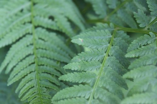 green ferns leaves