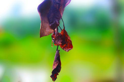 green dry leaf dry