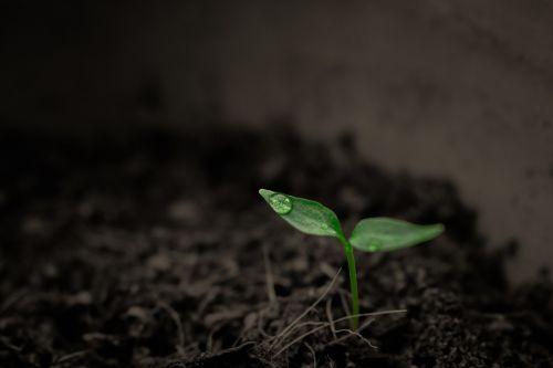green grow grow up