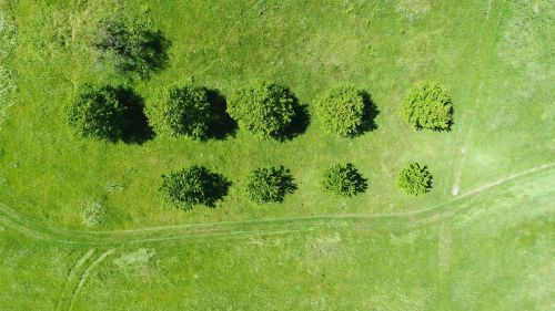 green grass grassland