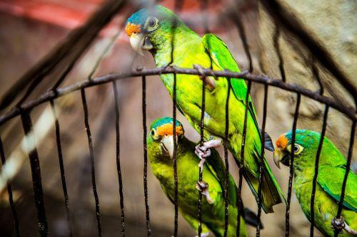 green birds animal
