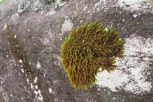 green mosses rocks