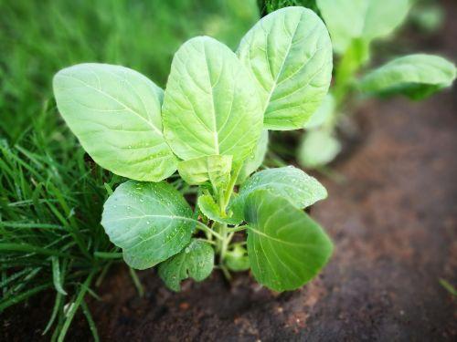 green plant refreshing