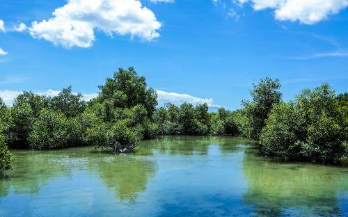 green mangrove nature