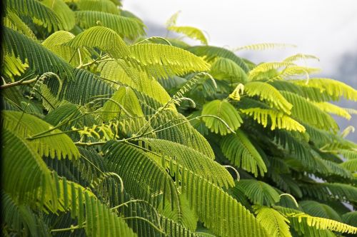 green photosynthesis leaves
