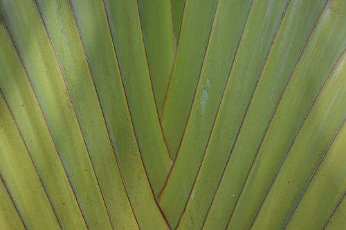 green structure palm