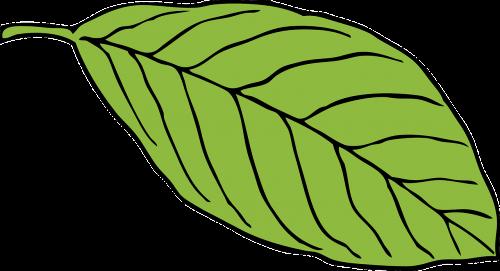 green leaf oval