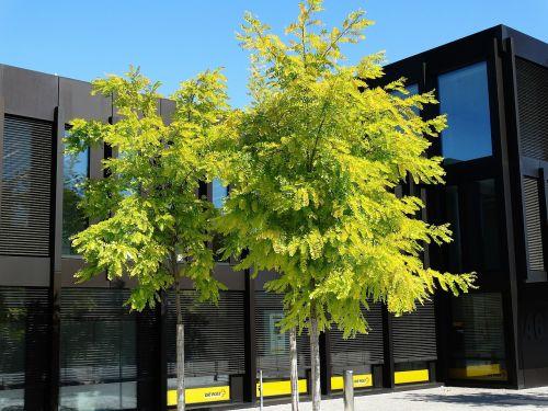 green tree building