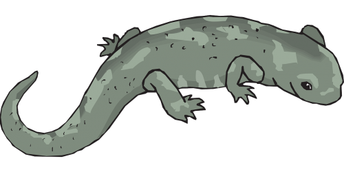 green big salamander