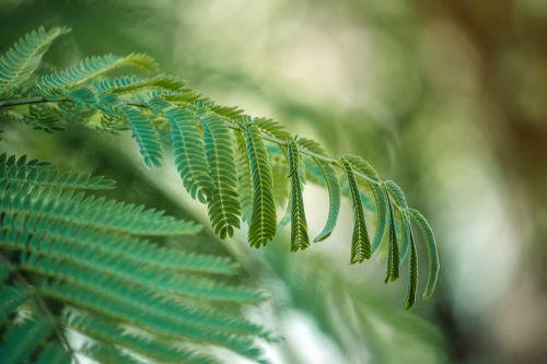 green leaves tropic