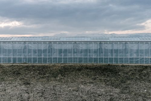 green house growth