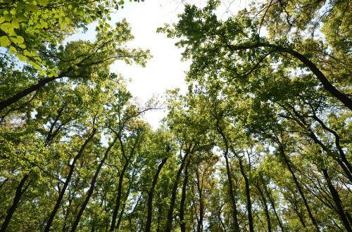 green forest oxygen