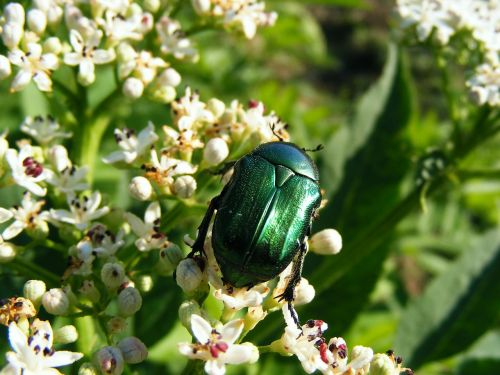 green bugs insects