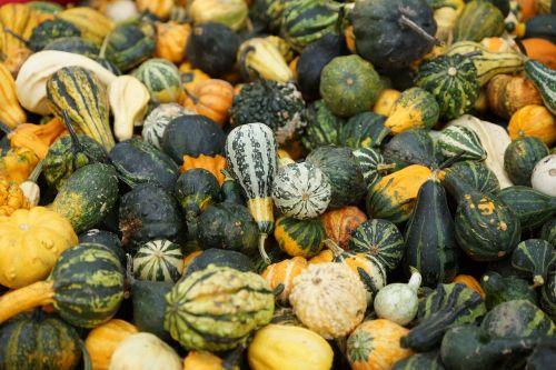 green pumpkin decorative squashes