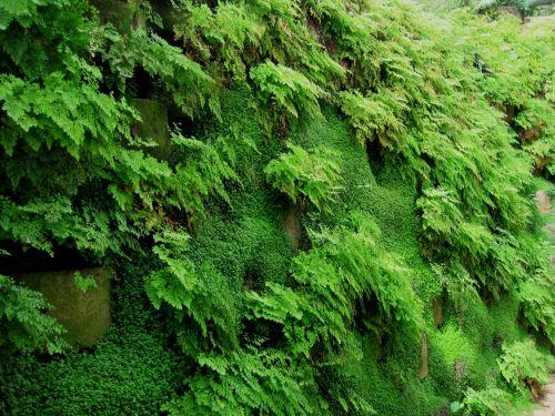 Green Fern Waterfall