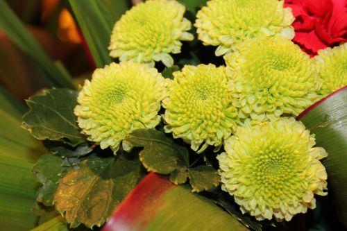 žalias & nbsp, gėlės, apvalios & nbsp, gėlės, ratas & nbsp, gėlės, gėlės, žiedlapiai, mažos & nbsp, žiedlapių, žalia gėlės