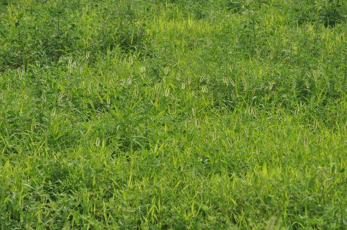 green grass grassland weeds