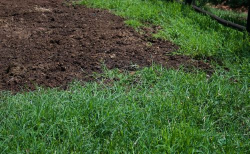 Green Grass And Horse Manure