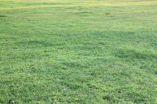 žalia žolė, žolė, žalias, augalai, lapai, sodas, tapetai, fonas, žalia žole fone