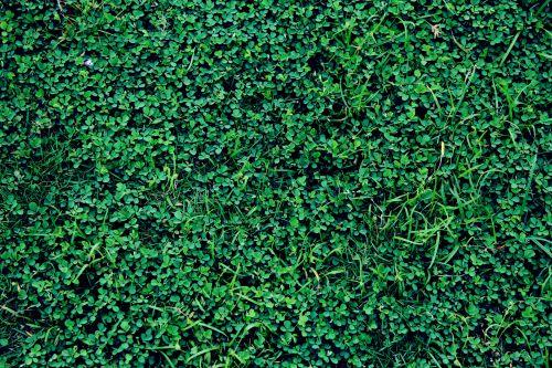 žalia žolė, žolė, žalias, augalai, lapai, sodas, tapetai, fonas, žalia žole fone 2