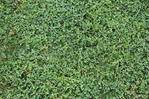 žalia žolė, žolė, žalias, augalai, lapai, sodas, tapetai, fonas, žalia žole fone 3