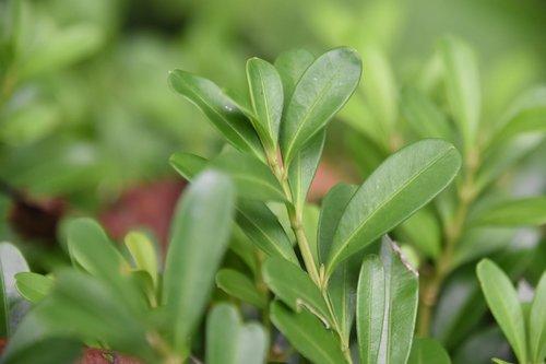 green leaf  succulent plants  green plants