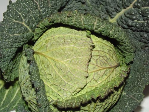 Green Leafy Cabbage (02)