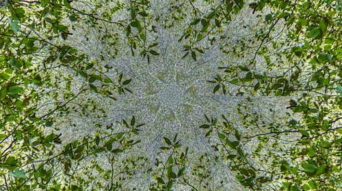 Green Leafy Vines Kaleidoscope