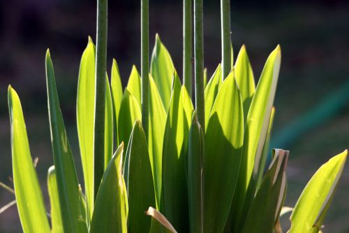 Green Leaves And Long Stems