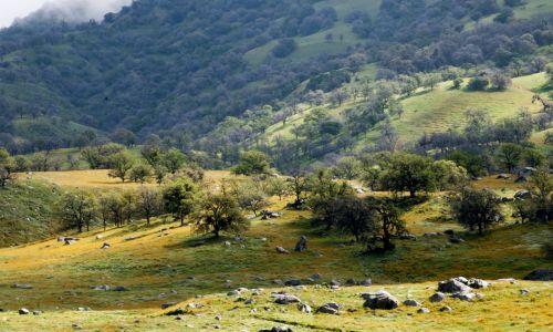 Green Meadows Landscape