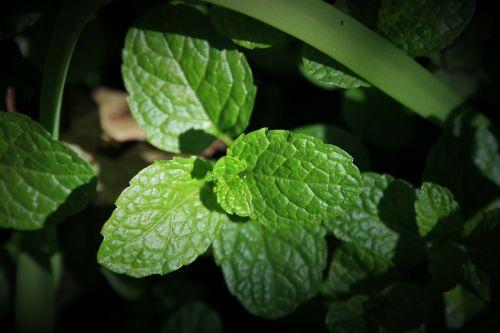 green mint mint green