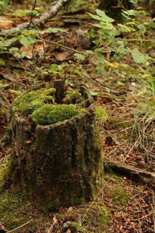 Green Mossy Tree Stump